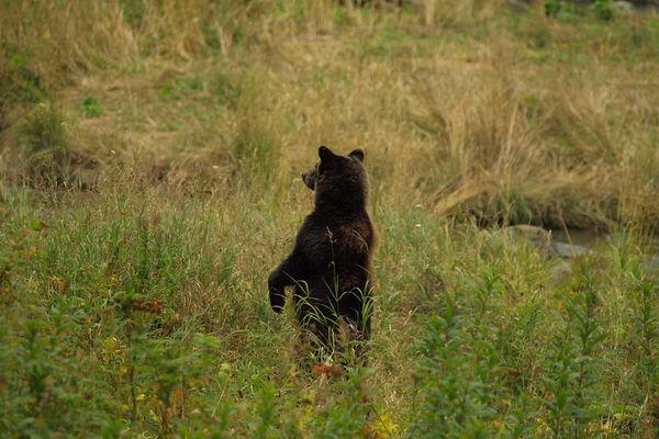 Reise in Kanada, Abenteuer Yukon: Big Salmon River und Chilkoot Trail