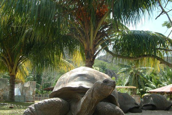 Reise in Seychellen, Aktives Inselhopping im tropischen Archipel