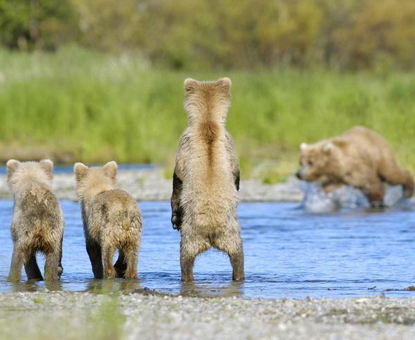 Reise in Vereinigte Staaten von Amerika, Alaska - Wildnisse Alaskas: Bären, Lachse, Gletscher