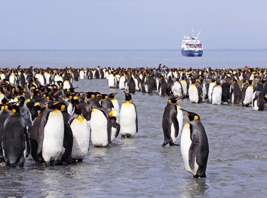 Reise in Antarktis, Pinguine in Südgeorgien