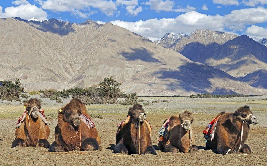 Reise in Indien, Blick vom Kloster Thiksey in Ladakh