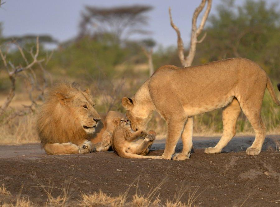 Reise in Kenia, Sonnenuntergang in der Masai Mara