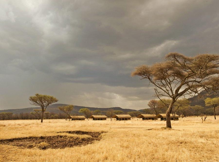 Reise in Kenia, Impalaweibchen in der Masai Mara