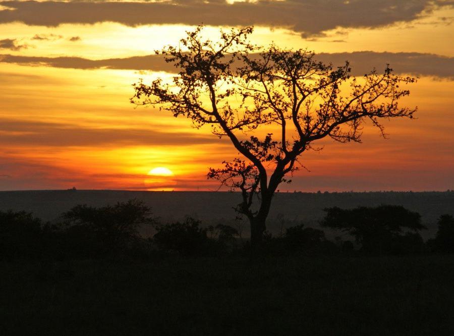Reise in Kenia, Breitmaulnashorn im Nakuru-Nationalpark