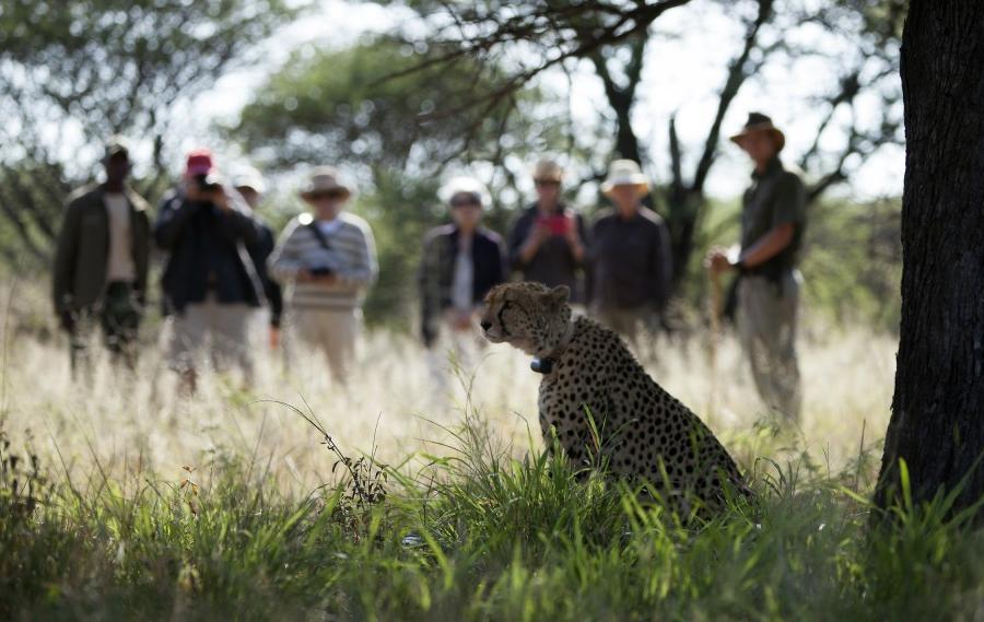 Reise in Namibia, Auf Spurensuche im wilden Norden Naturrundreise