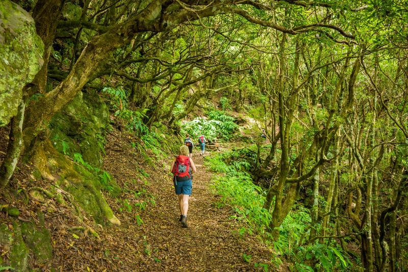 Reise in Portugal, Wanderung durch knorrigen Wald auf São Jorge