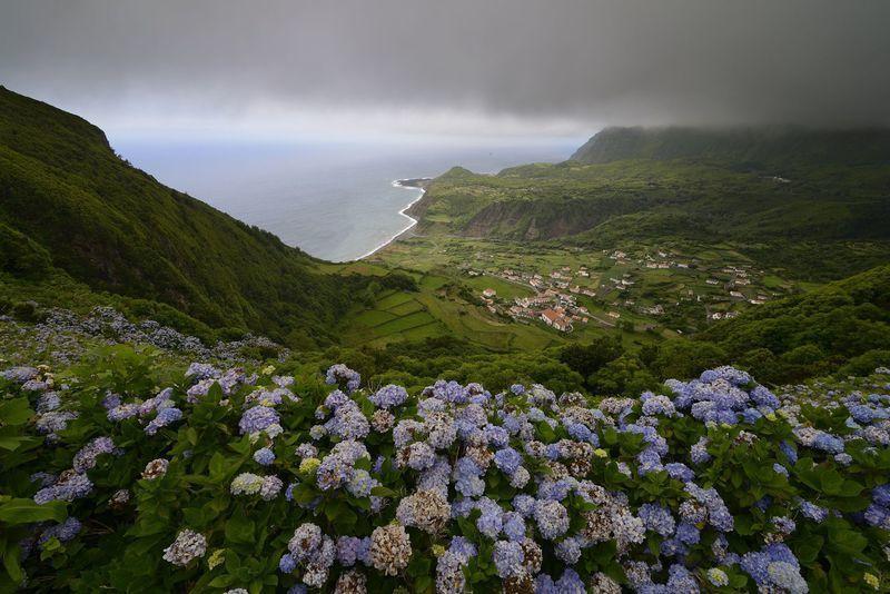 Reise in Portugal, Hortensienblüte mit Blick auf Fajãzinha