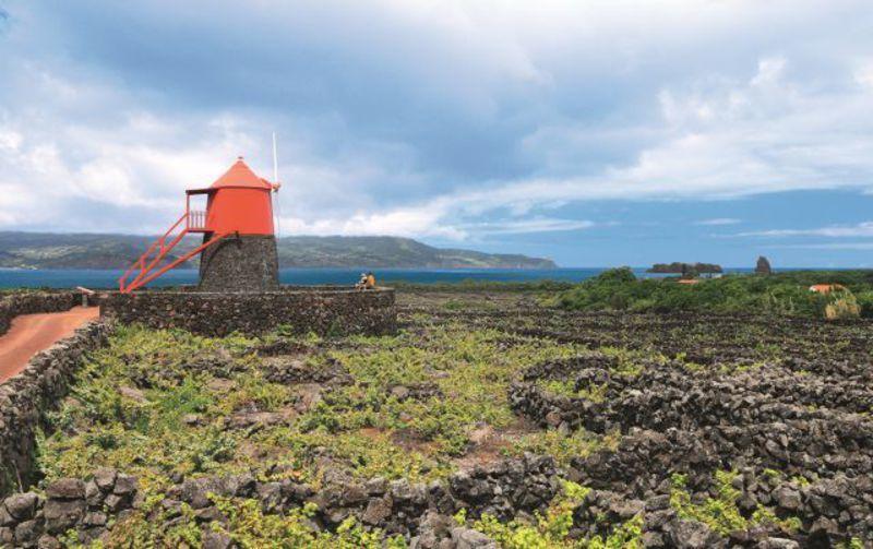 Reise in Portugal, Weinanbaugebiet auf Pico