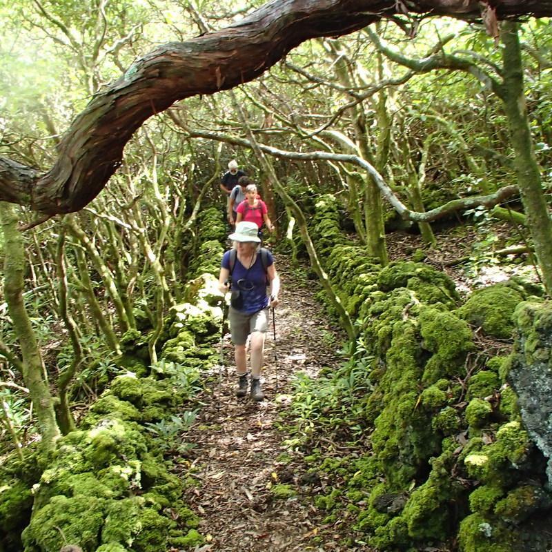 Reise in Portugal, Wanderung durch die Wälder auf Pico