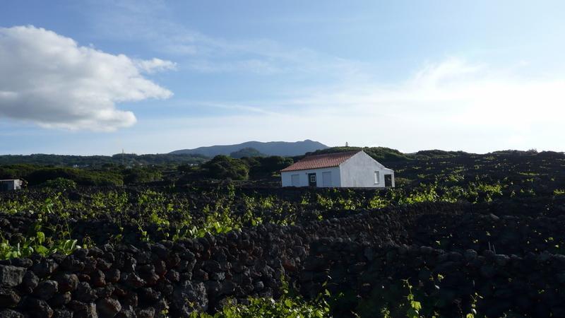 Reise in Portugal, Azoren: Liaison mit der Natur individuell