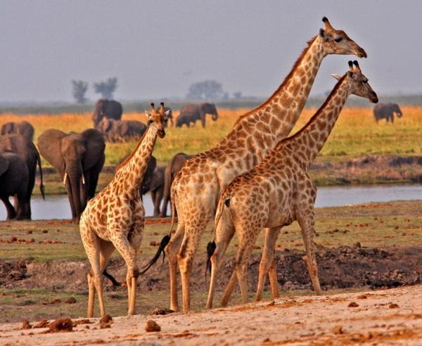 Reise in Botswana, Botswana - Im Reich der wilden Tiere