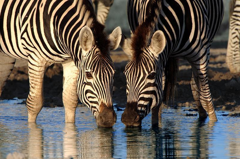 Reise in Botswana, Botswana & Simbabwe - Pirsch zu Land und zu Wasser