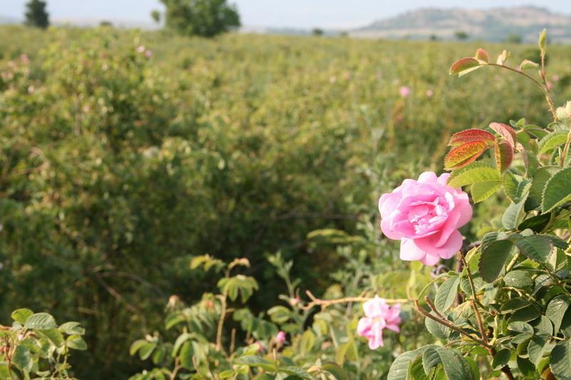 Reise in Bulgarien, Auf Wiesersehen im Rosental