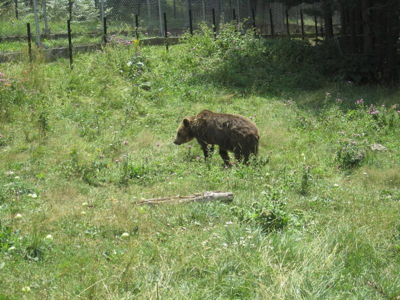 Reise in Bulgarien, Bärenreservat