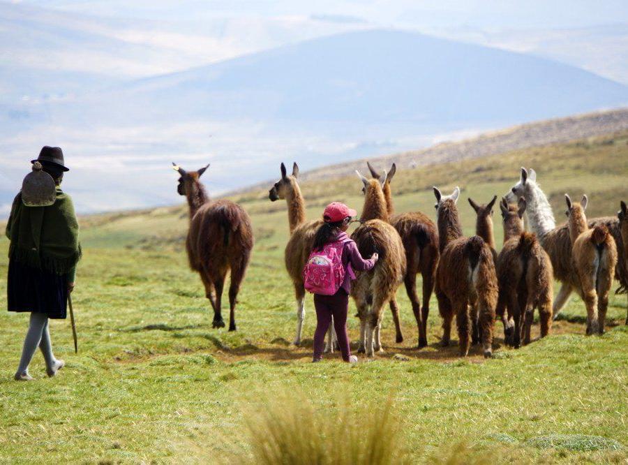 Reise in Ecuador, Aufstieg am Cayambe über den Gletscher. Am Horizont die Eisgipfel, Antisana, Chimborazo und Cotopaxi (v.l.).