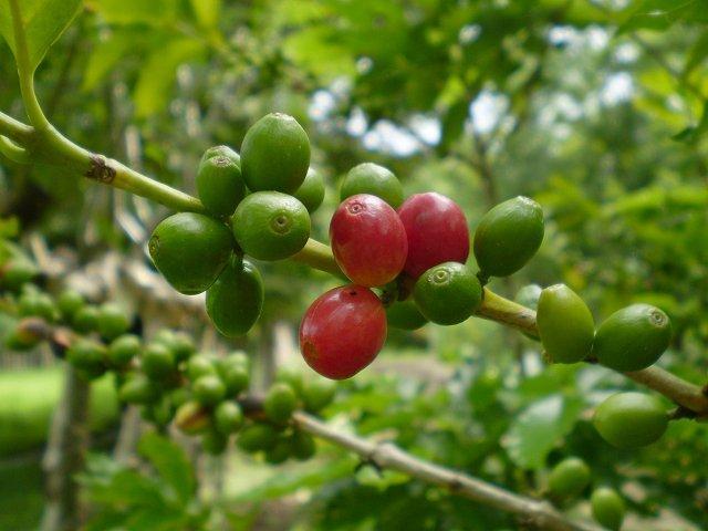 Reise in Costa Rica, k-Nica08_01.JPG