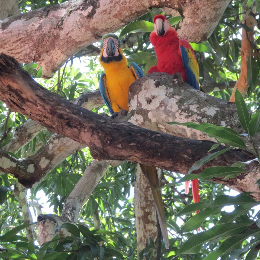 Reise in Costa Rica, CorneliaFleischhaker_Aras.jpg