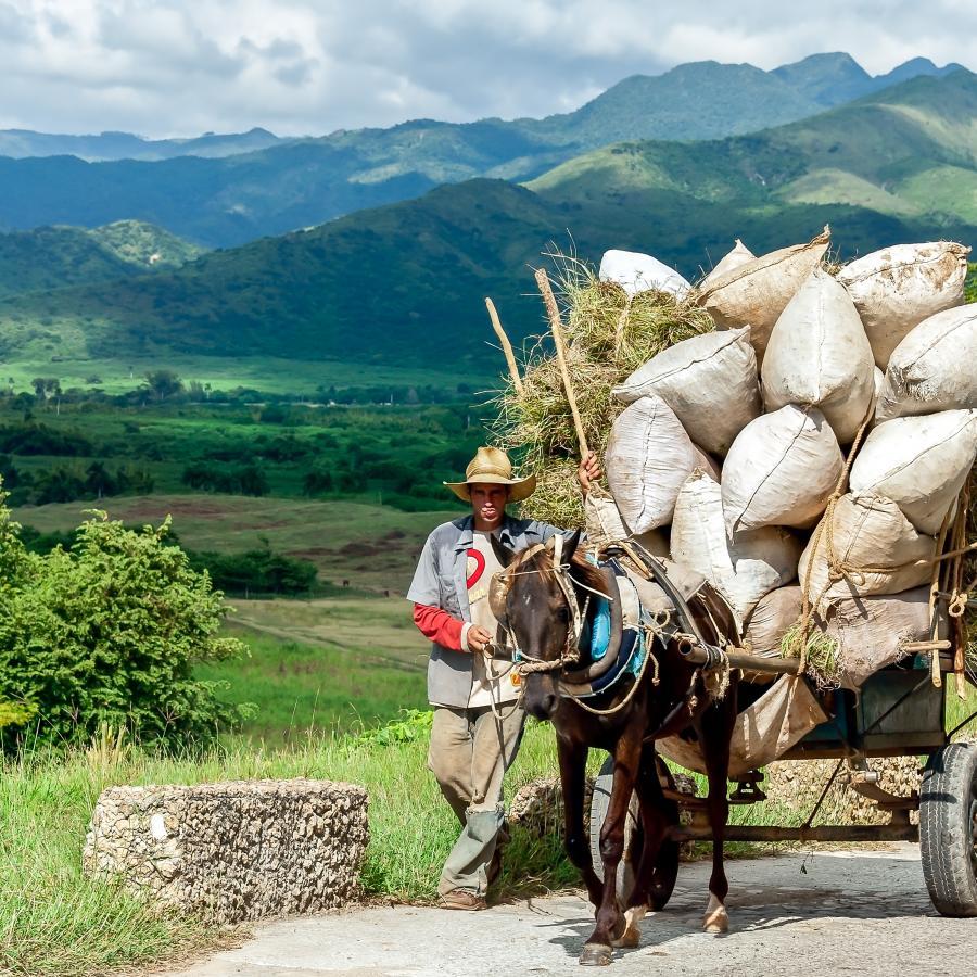 Reise in Kuba, UdoDreesmann_PferdekarrenmitHeuimValledelosIngenios.jpg