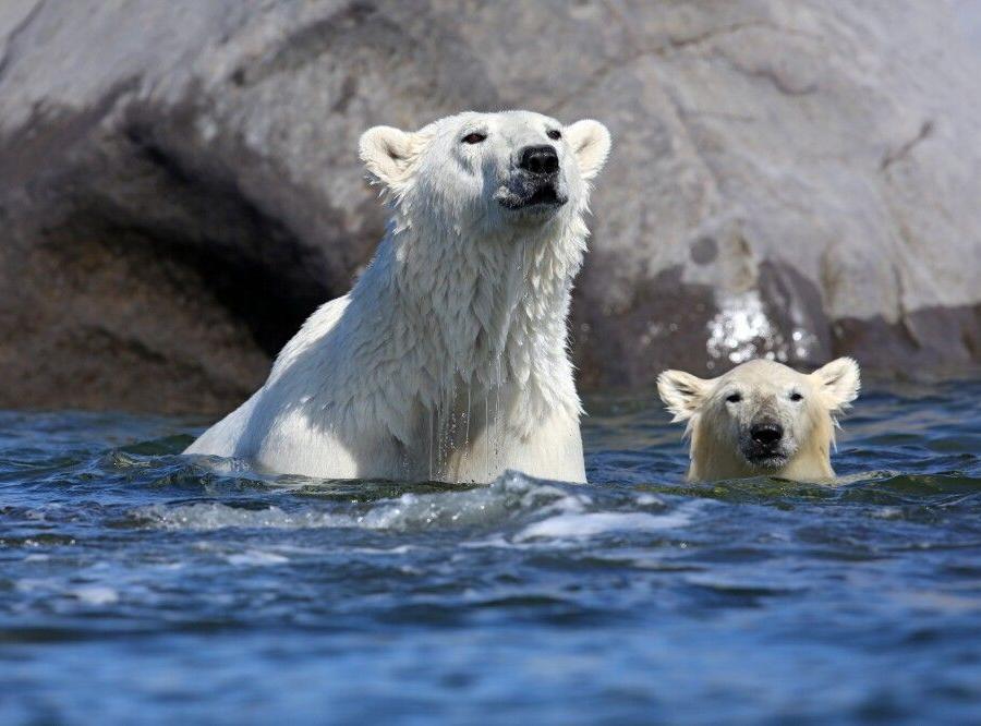 Reise in Kanada, Mutter mit Jungtier