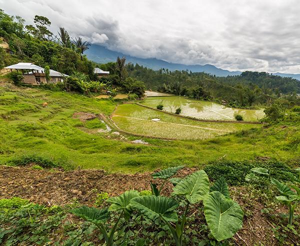 Reise in Indonesien, Reisfelder in Tana Toraja