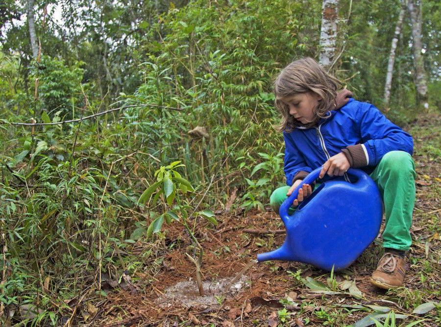 Reise in Brasilien, Baumpflanzen im Regenwald