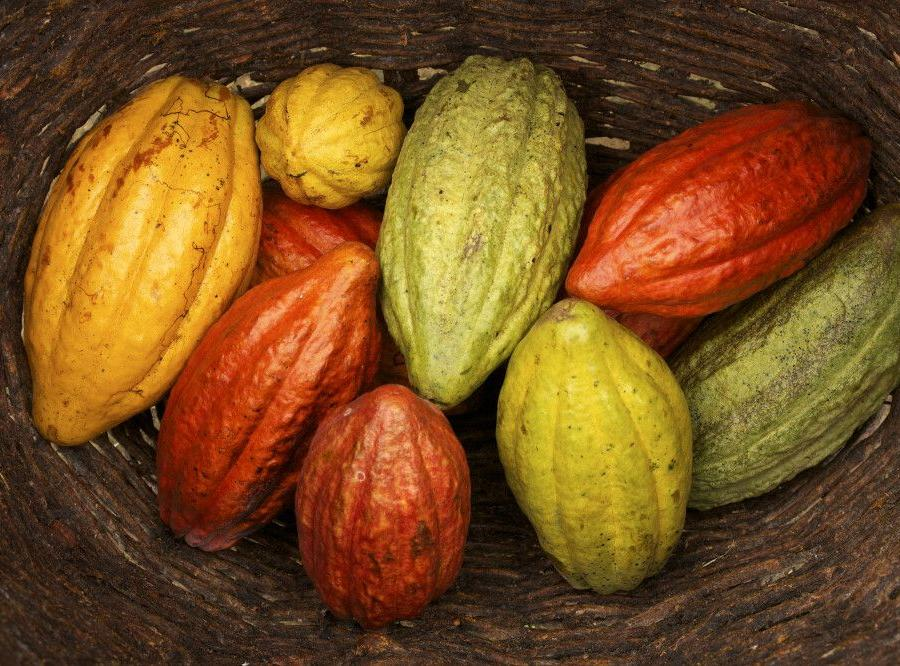 Reise in Brasilien, Kakaobohnen in verschiedenen Farben und Größen