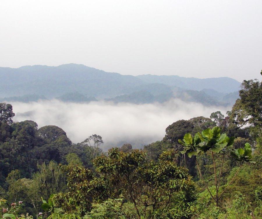 Reise in Demokratische Republik Kongo, Die Landschaft des Kahuzi Biega Nationalparks