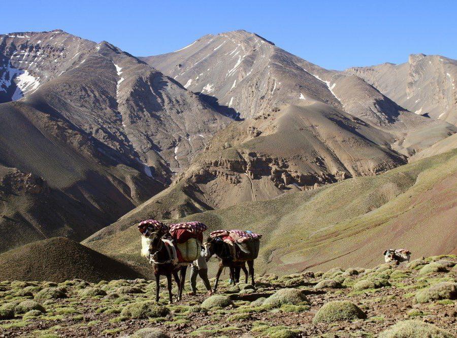 Reise in Marokko, Minztee