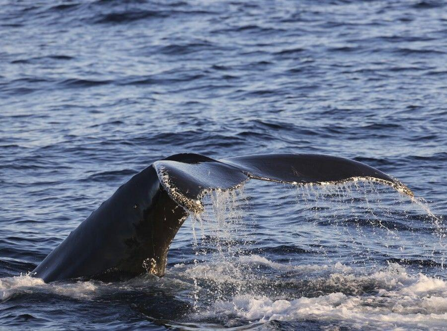Reise in Grönland, Walbeobachtung in der Dänemarkstraße