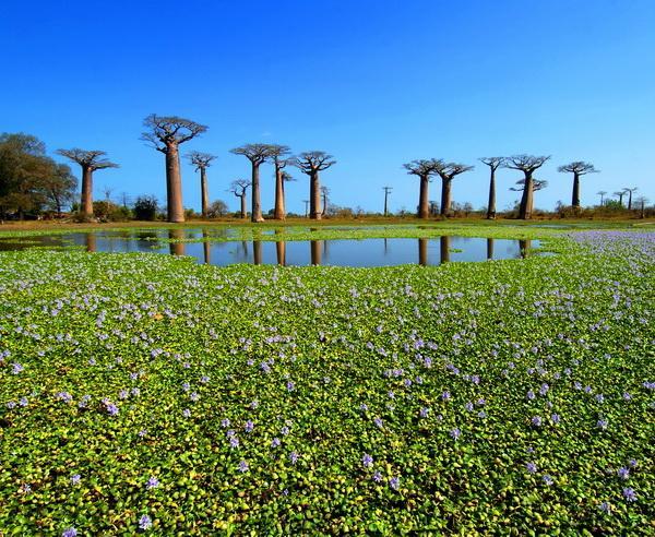 Reise in Madagaskar, Baobabbäume aus der Ferne