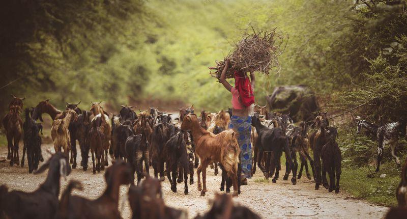 Reise in Indien, Landleben in Rajasthan während der Rundreise erleben