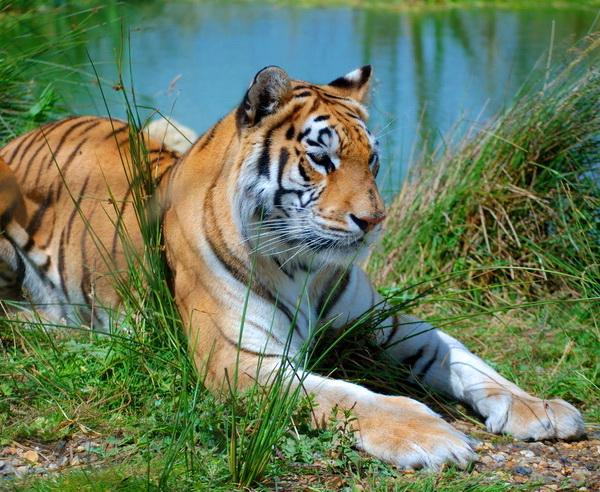 Reise in Indien, Indien - Sunderbans-Nationalpark