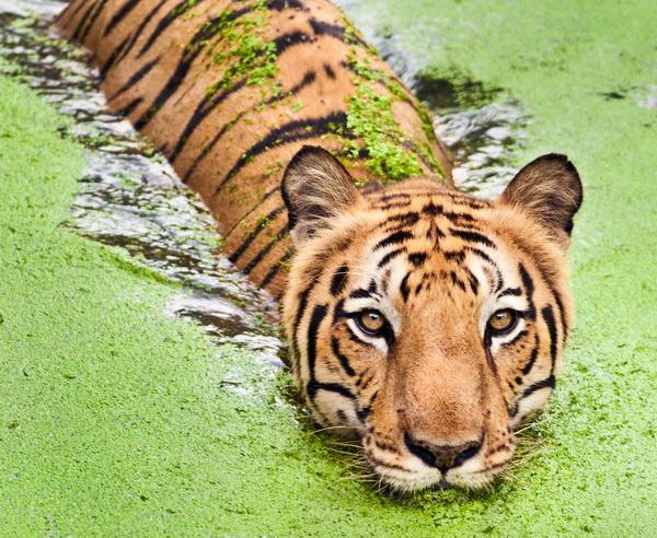 Reise in Indien, Indien - Sunderbans-Nationalpark