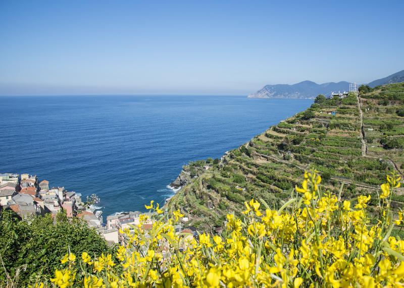 Reise in Italien, Italien - Cinque Terre - Weinterassen