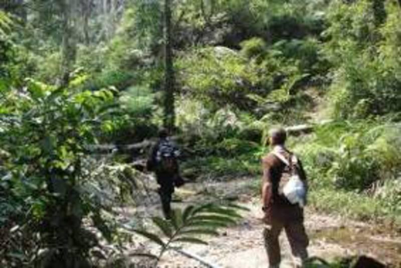 Reise in Kambodscha, Kambodscha - Cardamom Wald