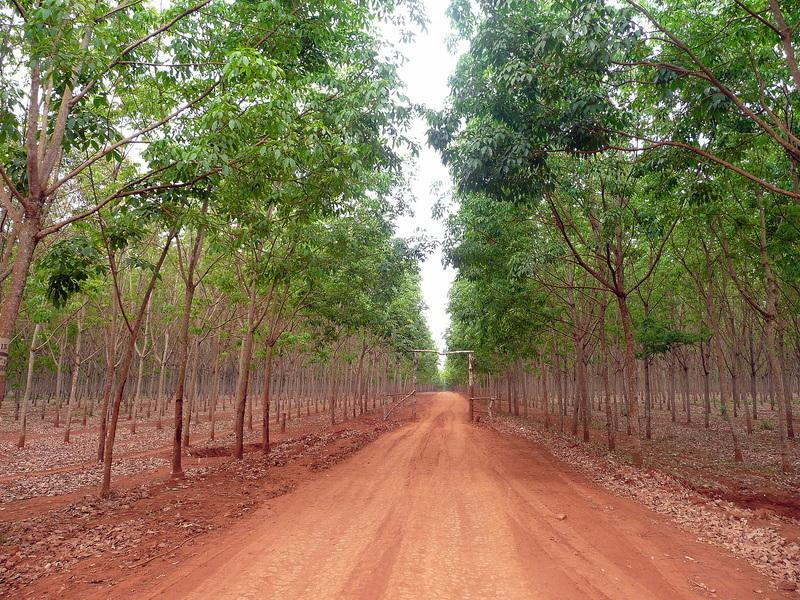Reise in Kambodscha, Kambodscha: Kultur, Natur und Erholung