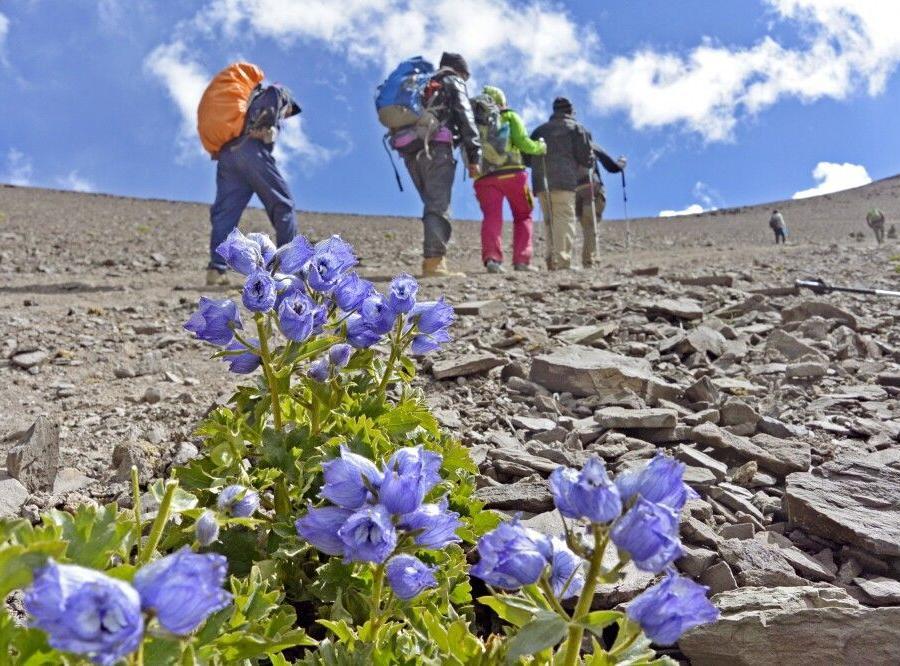 Reise in Indien, Aufstieg von Nimaling zum Kongmaru La (5130m)