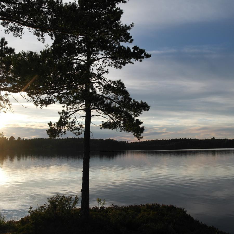 Reise in Schweden, Kindertraum Älgen