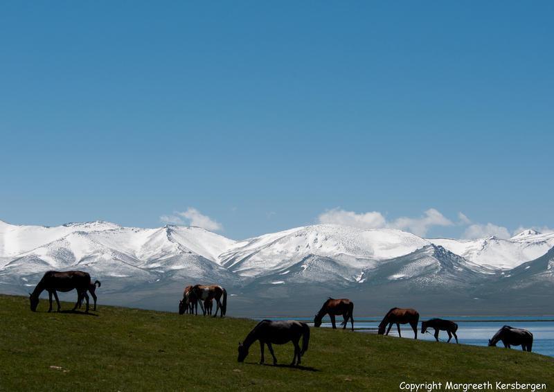 Reise in Kirgistan, Pferde am Son Kul See_c Margreeth Kersbergen