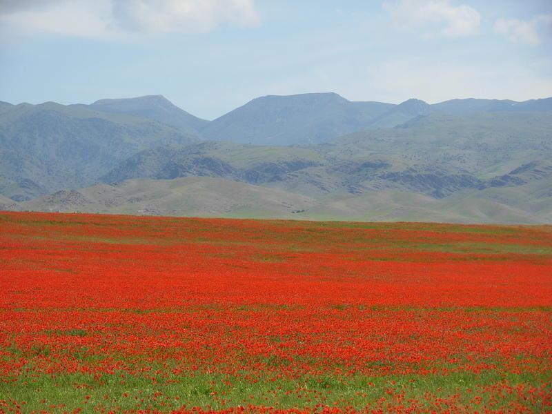 Reise in Usbekistan, Ein letztes Mal die Flora mit leuchtenden Blumen Kirgisistans betrachten