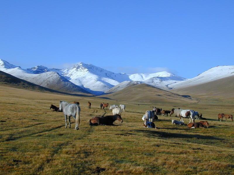 Reise in Usbekistan, Pferde in der Weite der kirgisischen Landschaft