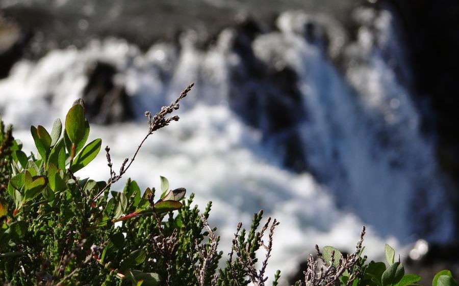 Reise in Island, Lava, Höhlen, Heide – Hochlandtrekking im einsamen Nordwesten Trekkingreise