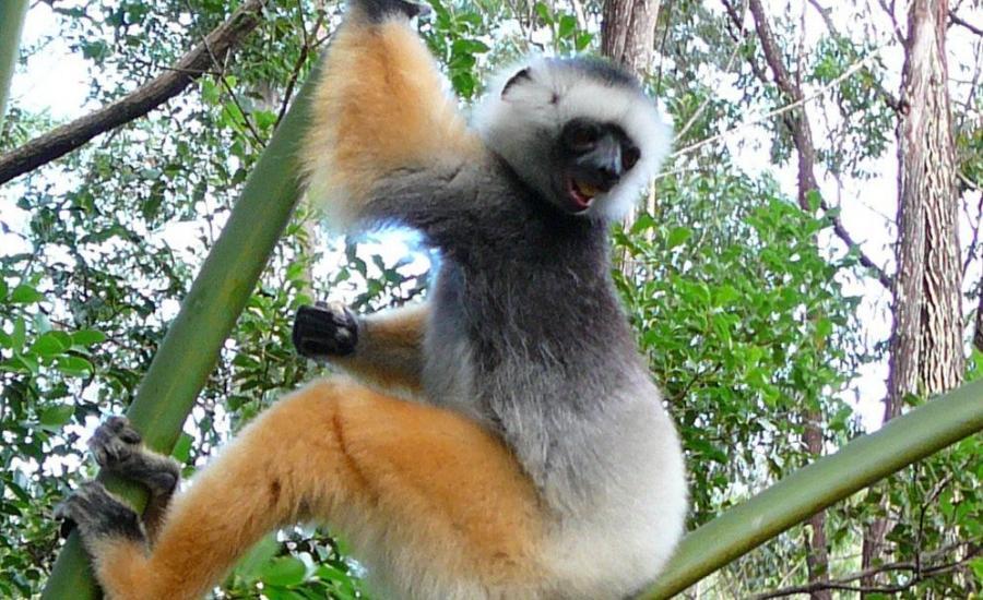 Reise in Madagaskar, Madagaskar - Entdeckungen auf der Insel der Lemuren (24 Tage Erlebnisrundreise)