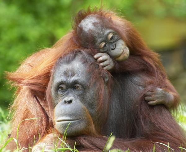 Reise in Malaysia, Malaysia / Borneo - Exotisches Sarawak