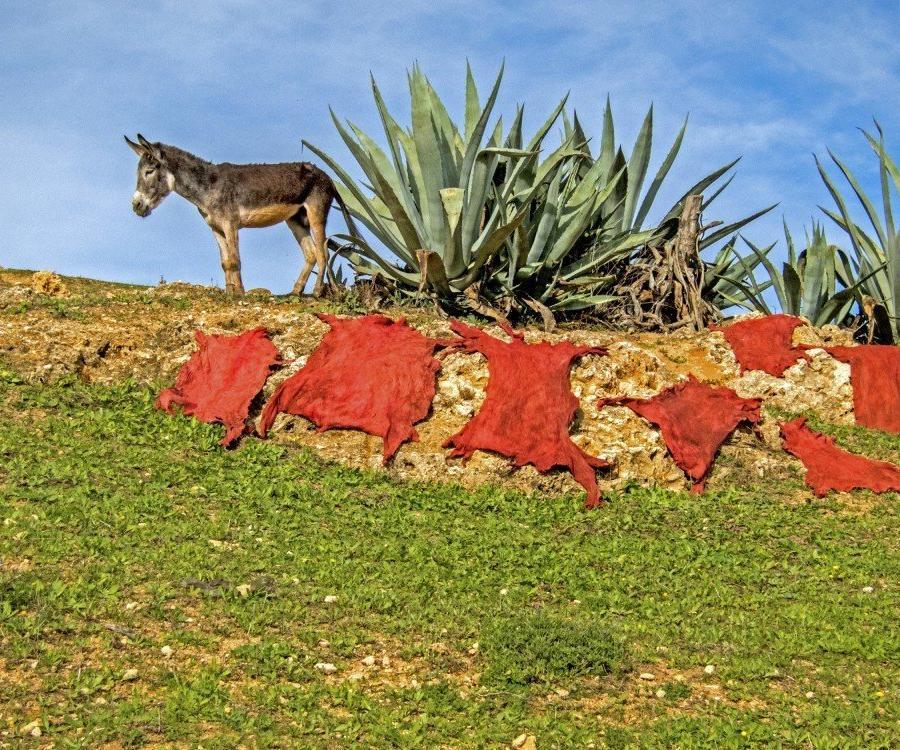 Reise in Marokko, Esel mit gegerbten Leder