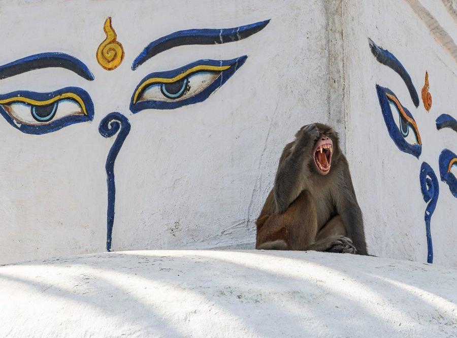 Reise in Nepal, Wandern in der Annapurna-Region