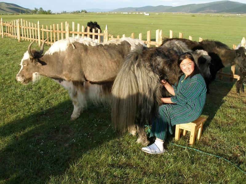Reise in Mongolei, Yakzüchtende Nomaden unterwegs