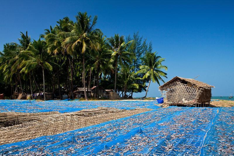 Reise in Myanmar, Trockenfisch ist ein wichtiger Wirtschaftszweig in der Gegend um Myeik