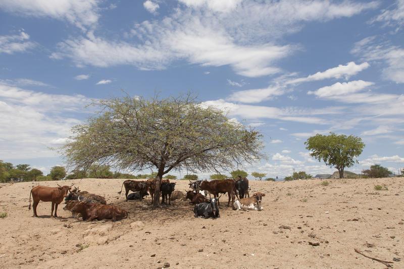Reise in Namibia, Landschaft des Kaokaveld