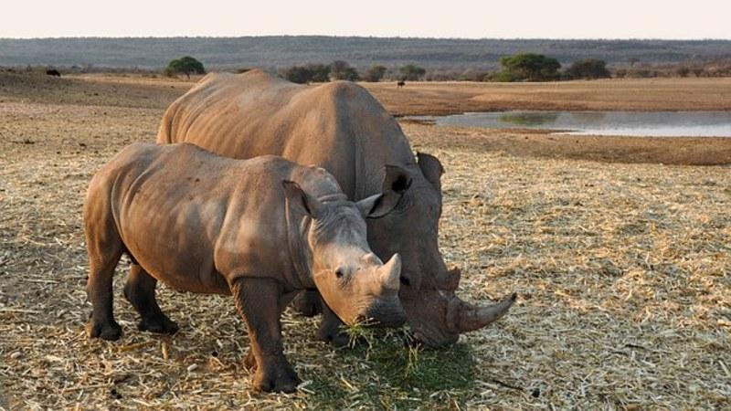 Reise in Namibia, Auge in Auge mit einem Nashorn